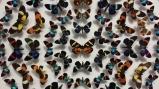Nature's Wonders: Butterflies
